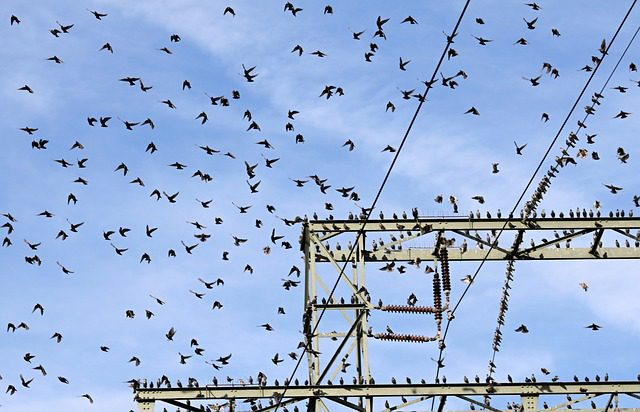 Bird Perching on Power Lines, from problem to solution