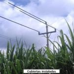 Tree Problems With Utility Power Lines